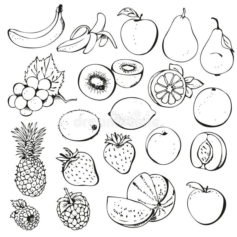 bärsamlingsfrukt stock illustrationer