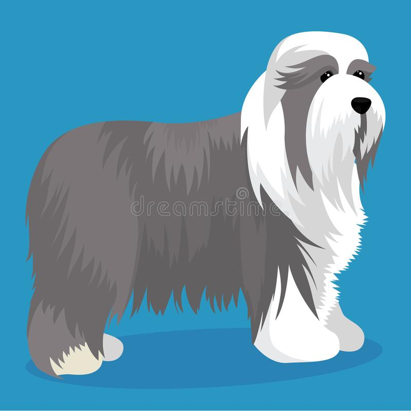 Bärtige Collie Dog lizenzfreie abbildung