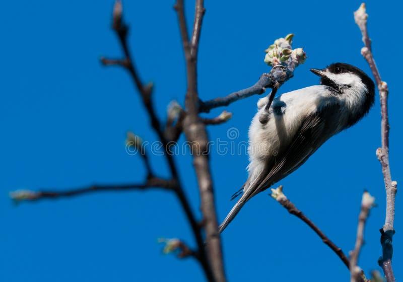 Bästa fågelunge arkivbild