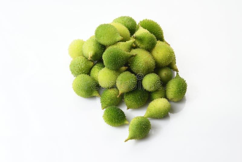 Bästa sikt av den nya gröna taggiga kalebassen royaltyfri foto