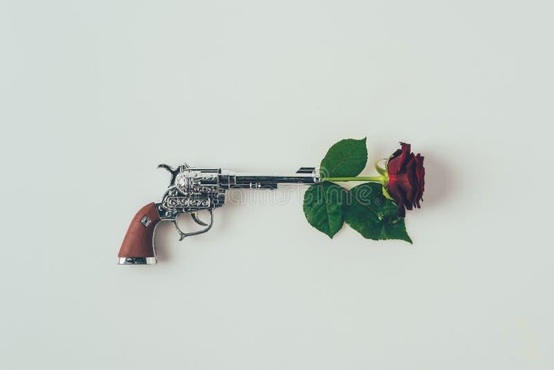 bästa sikt av den röda rosen i vapentrumma royaltyfria foton