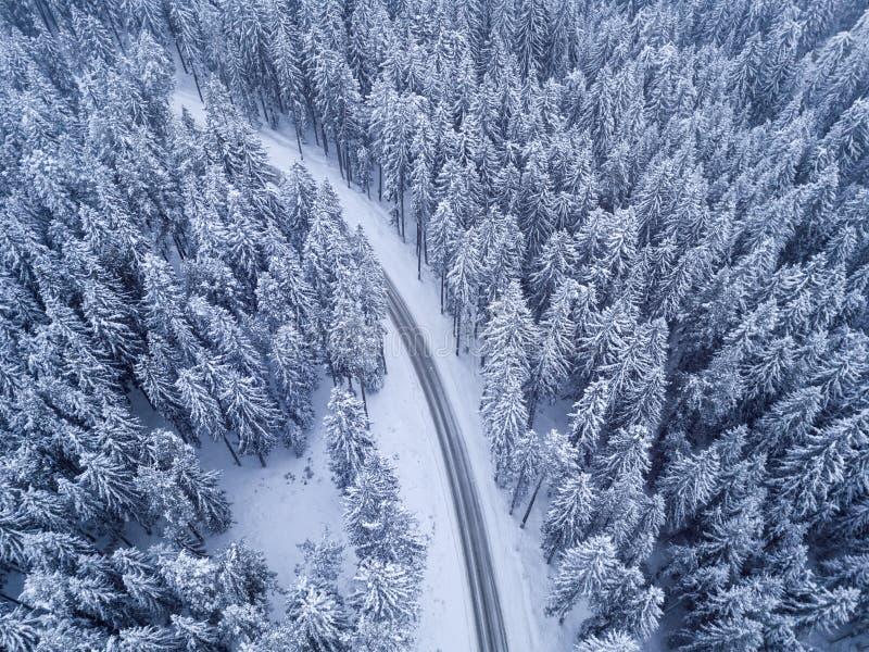 Bästa sikt av den vinterskogen och vägen royaltyfri foto