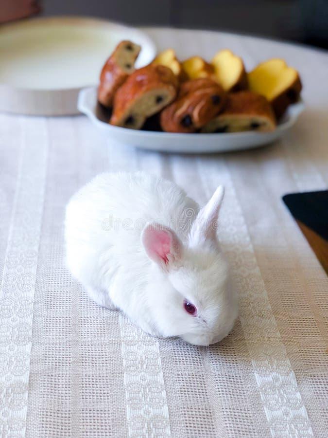 Bästa sikt av den vita påskkaninen på tabellen Gullig liten kanin på den vita tabelltorkduken royaltyfria foton