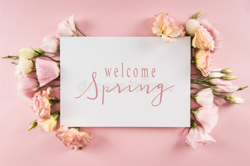 Bästa sikt av det VÄLKOMNA VÅRkortet och härliga blommande blommor arkivbild