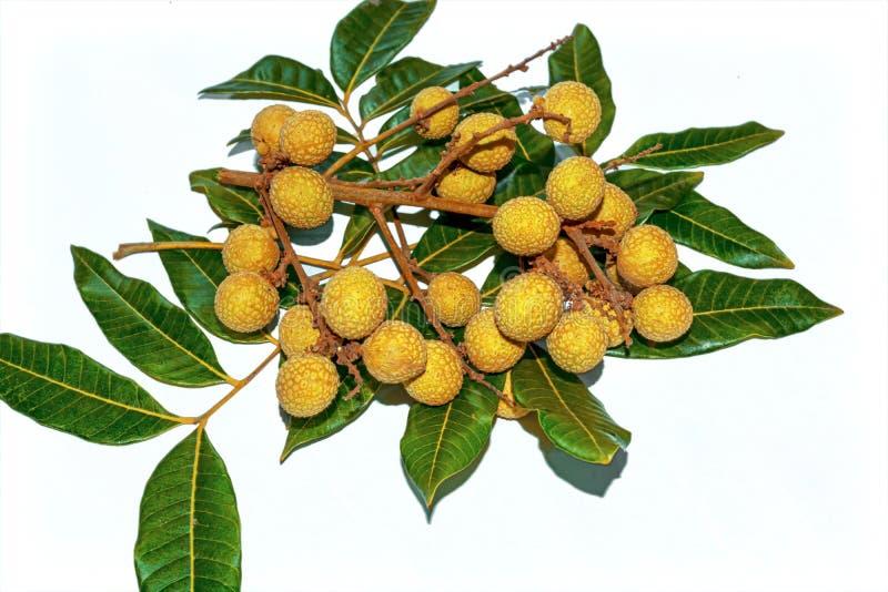 Bästa sikt av Dimocarpuslonganen En grupp av Longanfrukter med gröna sidor på vit isolerad bakgrund royaltyfri foto