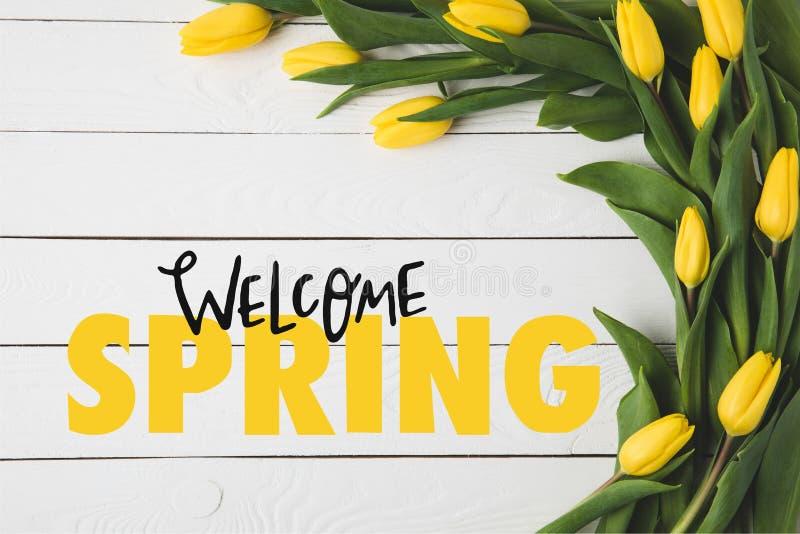 bästa sikt av härliga blommande gula tulpan och VÄLKOMMEN VÅRbokstäver på vit royaltyfri foto