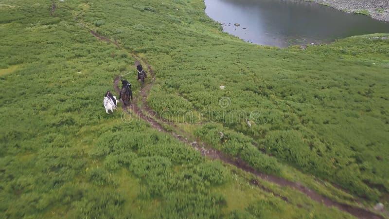 Bästa sikt av hästjakt gem Jaktplats på hästrygg i natur royaltyfria foton