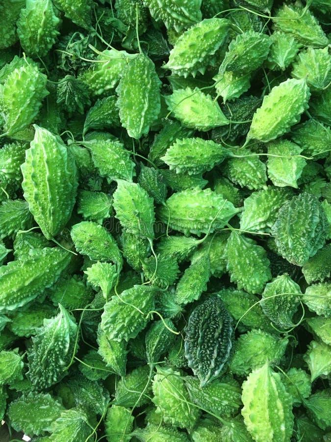 Bästa sikt av nya gröna bittra kalebasser royaltyfria foton