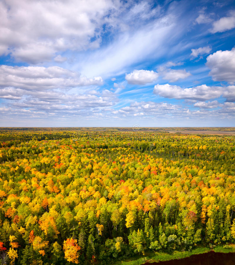 Bästa sikt av skogen i höst. arkivbilder