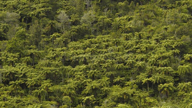Bästa sikt av täta tropiska Forest Green Palm Trees royaltyfria foton