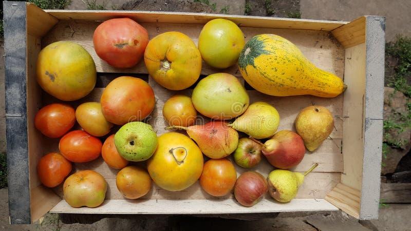 Bästa sikt av träasken med mogna organiska frukter och grönsaker arkivbilder