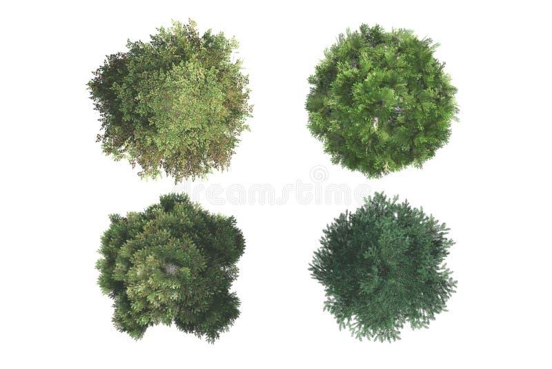 Bästa sikt av träd royaltyfria bilder