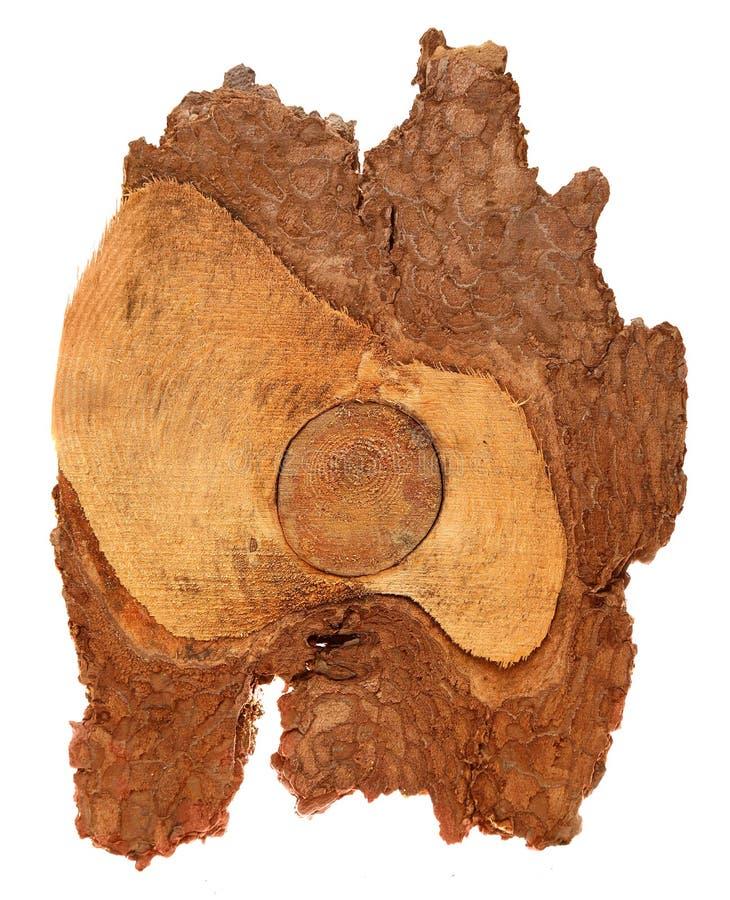 Bästa sikt av trädstubben som isoleras på vit bakgrund arkivfoton