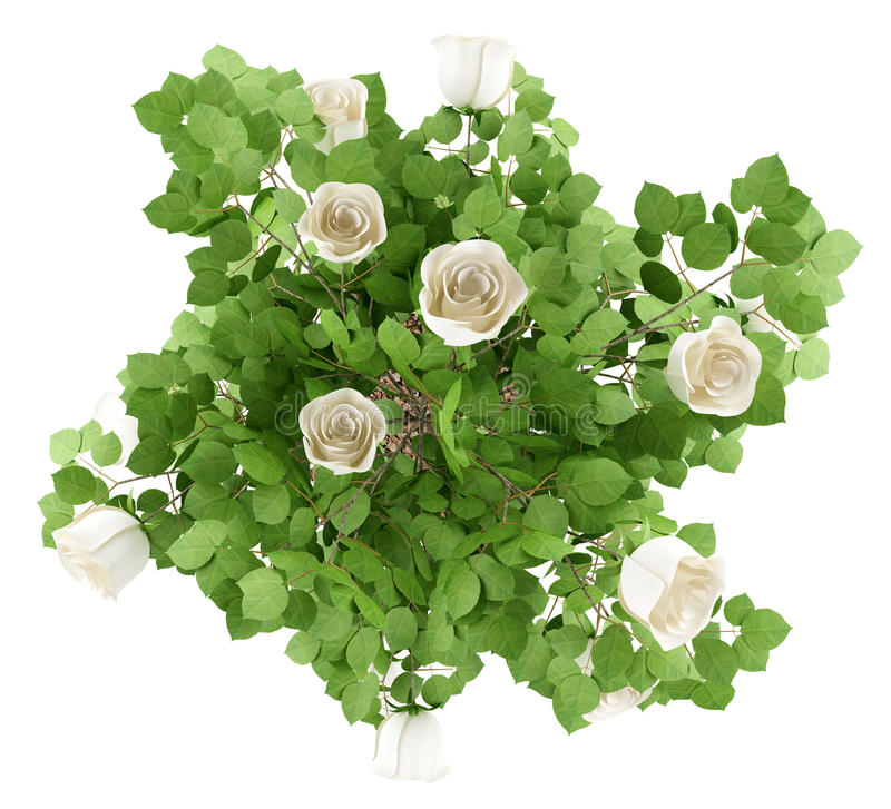 Bästa sikt av växten för vitrosträd som isoleras på vit vektor illustrationer