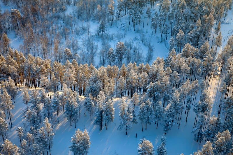 Bästa sikt av vinterskogen arkivbilder