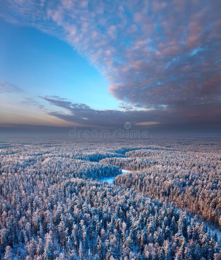 Bästa sikt av vinterskogen royaltyfri foto