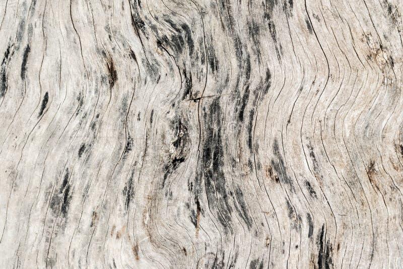 Bästa sikt för gammal wood texturbakgrundsyttersida Tappning och grunge royaltyfri fotografi