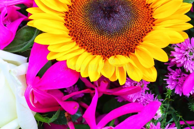 Bästa sikt för närbild, härlig gul solros och rosa orkidéblommor, tyg för naturlig bakgrund royaltyfria bilder