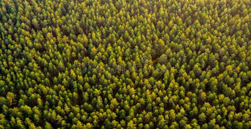 Bästa sikt för skog