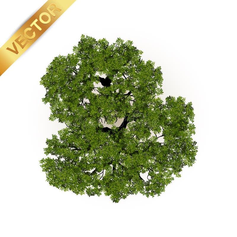 Bästa sikt för träd för landskapvektorillustration royaltyfri illustrationer