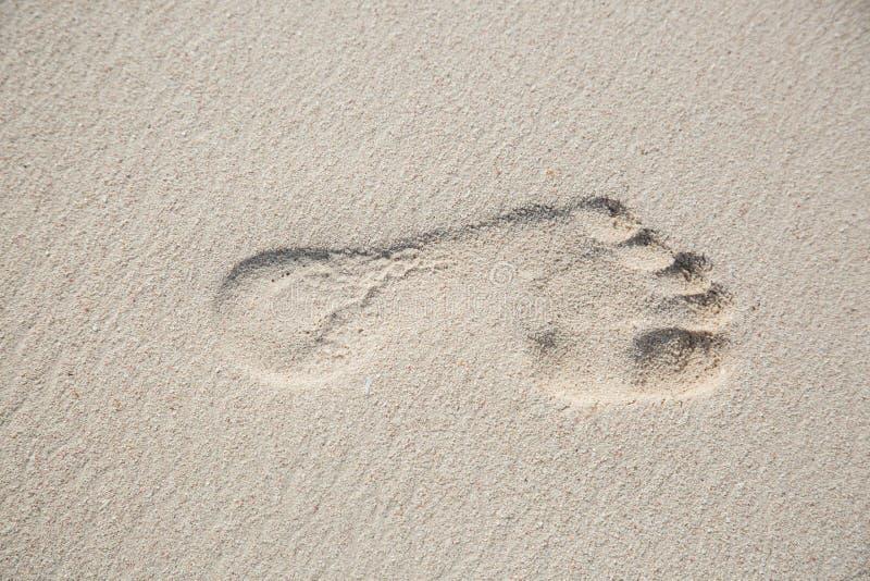 Bästa sikt från ett vänstert fotspår i en sandjordning royaltyfri foto