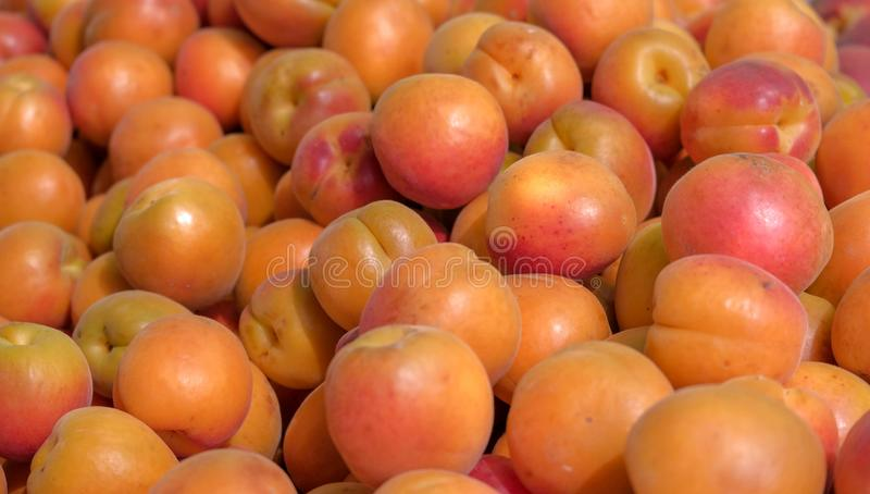 Bästa sikt på nya mogna aprikosfrukter royaltyfria foton