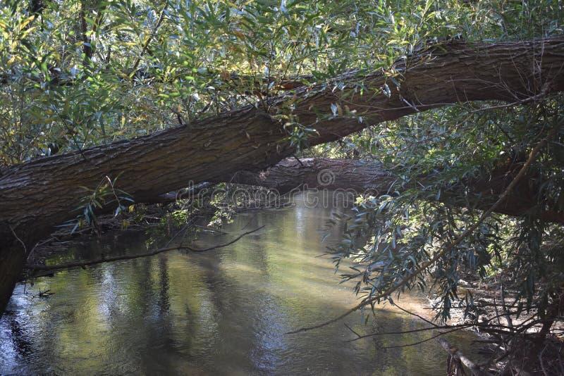 Bäume über Wasser entlang Grüngürtel stockbilder