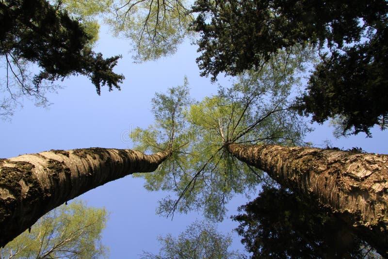 Bäume. stockbilder
