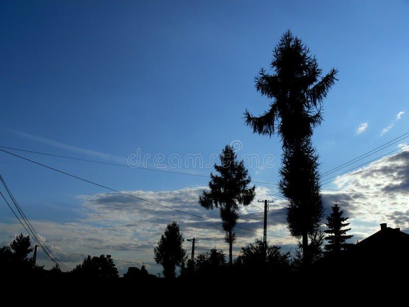 Bäume stockfotografie
