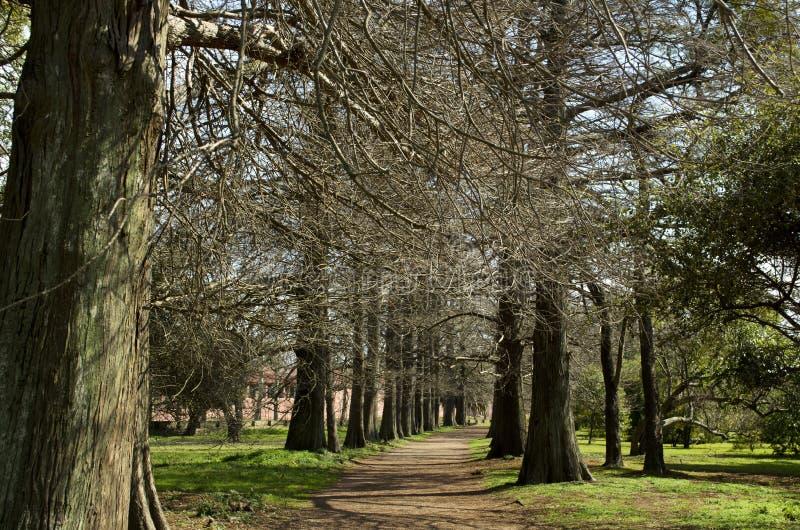 Bäume lizenzfreie stockfotos