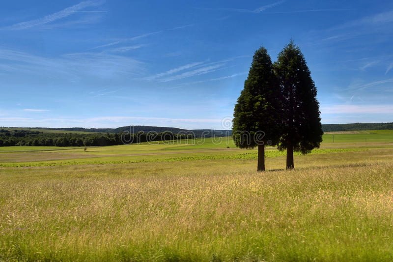 2 Bäume lizenzfreie stockfotografie
