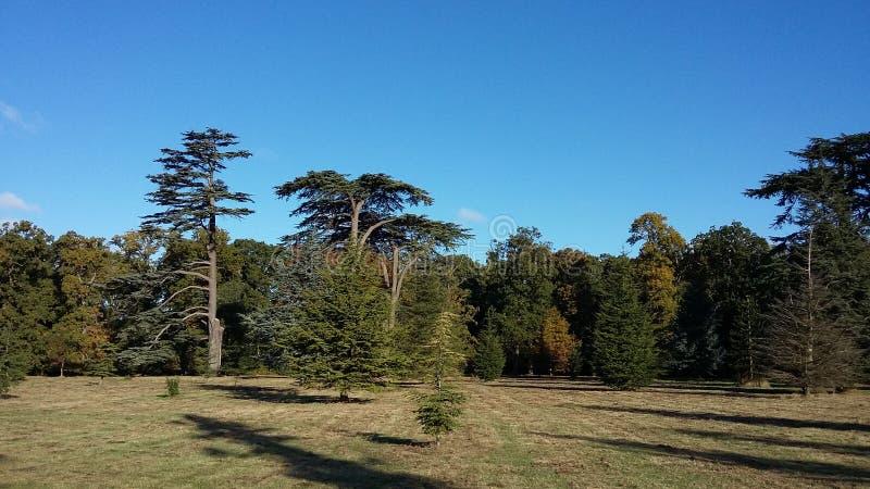 Bäume lizenzfreie stockfotografie