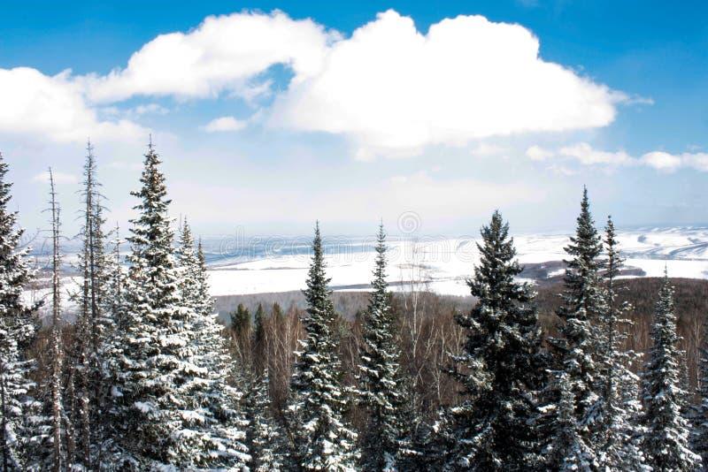Bäume abgedeckt mit Schnee stockfotografie