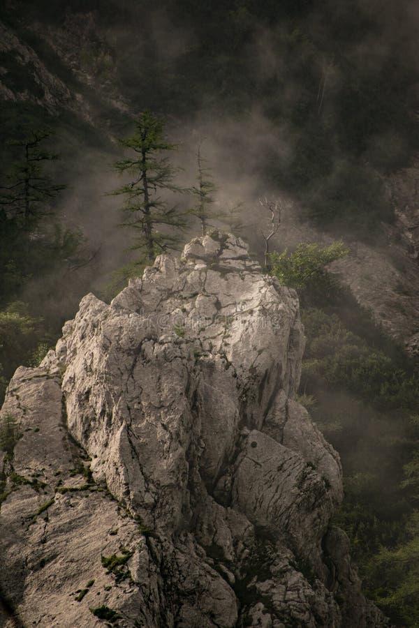 Bäume auf dem flüchtigen Blick stockfotos