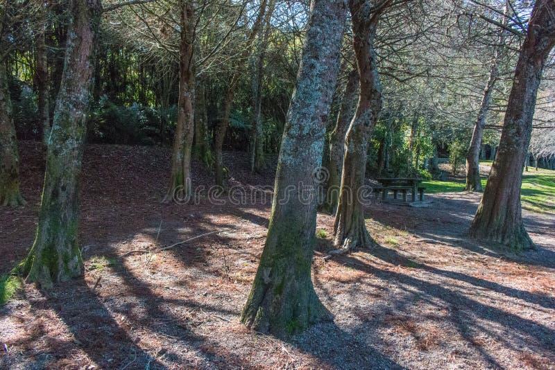 Bäume auf der Flussbank lizenzfreie stockbilder