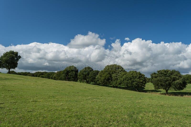 Bäume auf einem Feld lizenzfreie stockbilder