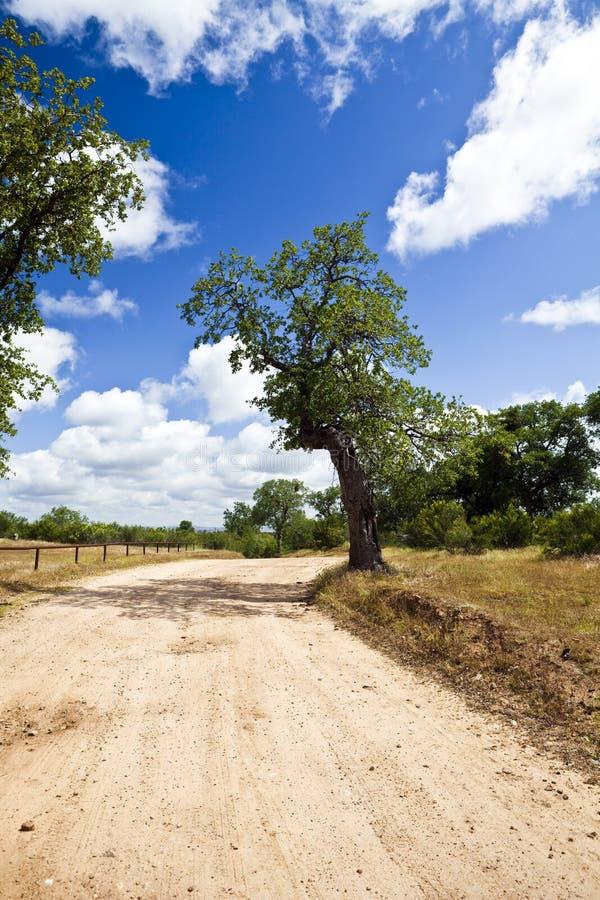 Bäume auf einem Schotterweg lizenzfreie stockfotografie