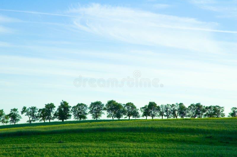 Bäume auf Horizont lizenzfreie stockfotografie