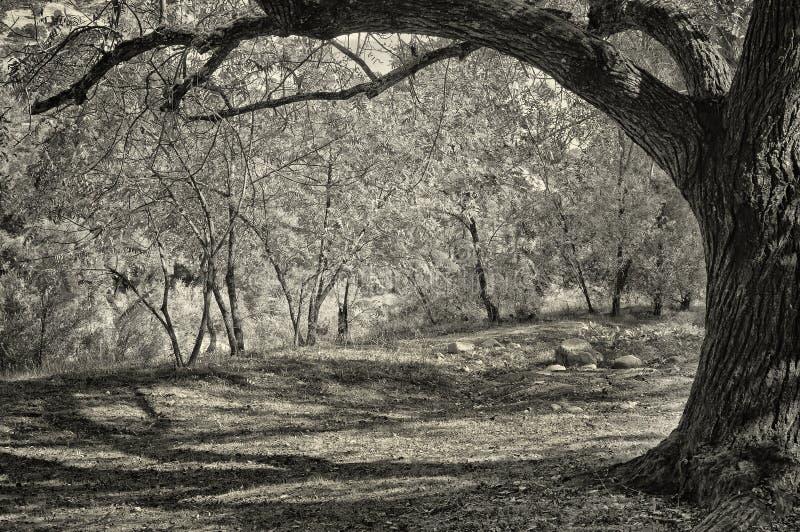 Bäume auf Riverbank, Kalifornien lizenzfreies stockfoto