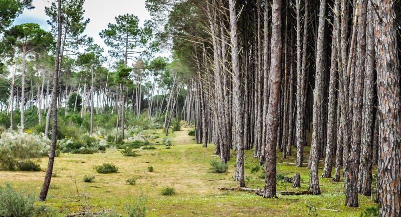 Bäume aufeinander folgend lizenzfreies stockbild