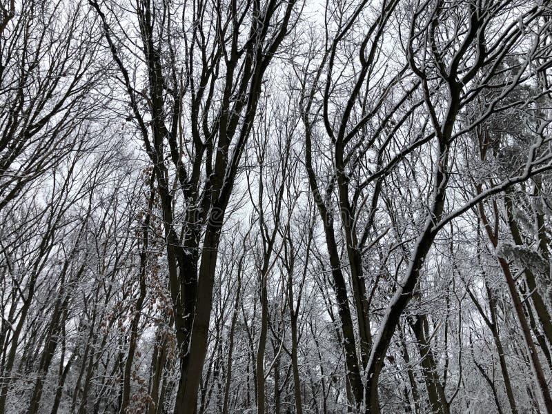 Bäume bedeckt im Schnee im Winter stockfotos