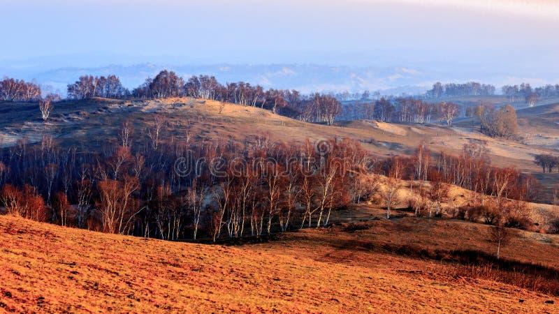 Bäume bei Innere Mongolei lizenzfreie stockfotos