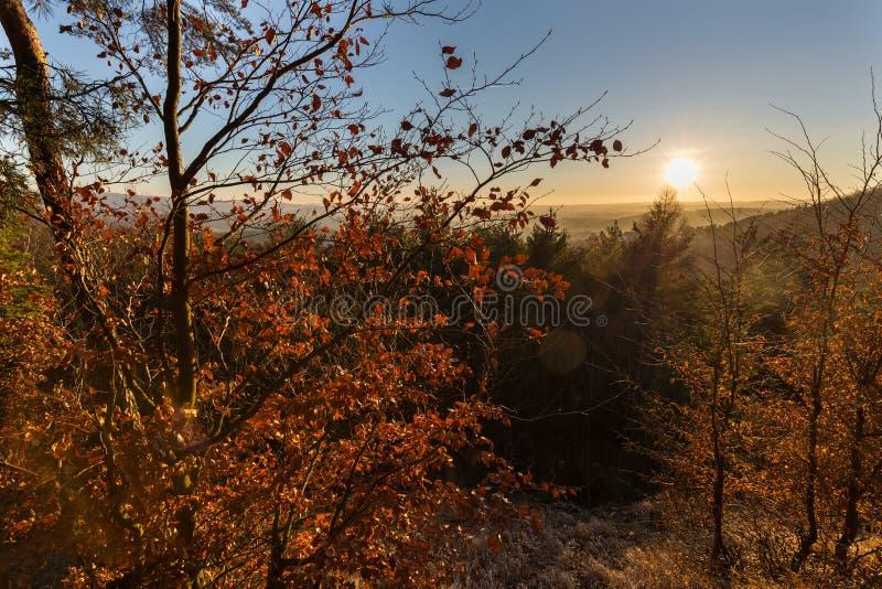 Bäume beleuchtet durch die untergehende Sonne stockfoto