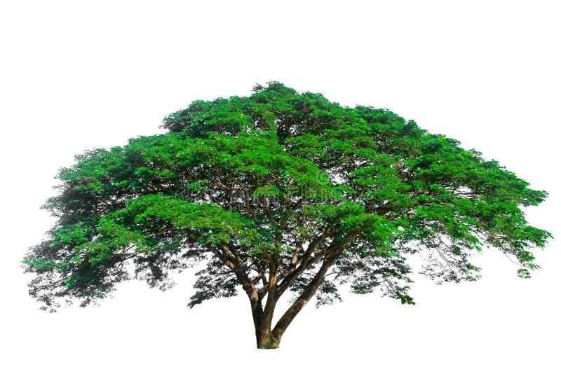Bäume benutzt, um zu verzieren oder zu entwerfen Auf einem Weiß lokalisierter Hintergrund stockfoto