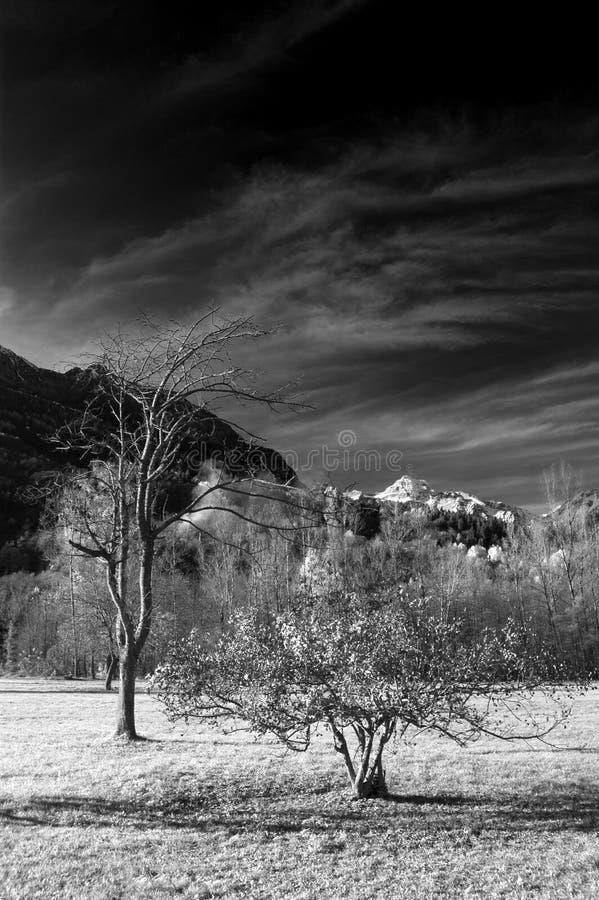 Bäume am Berg im Infrarotb&w stockbilder