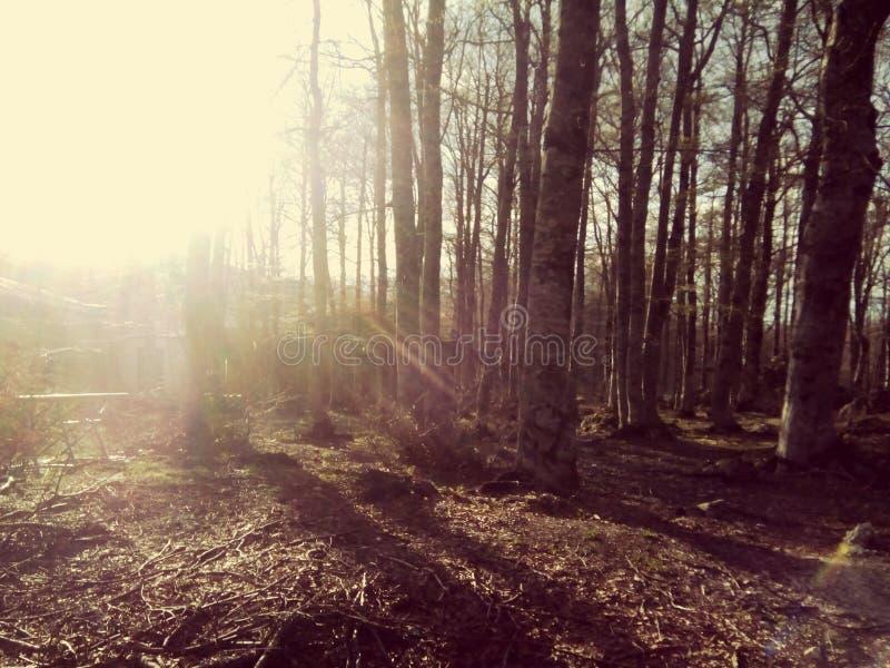 Bäume, Berge, Land und Natur ein Schritt vom Paradies lizenzfreie stockfotografie