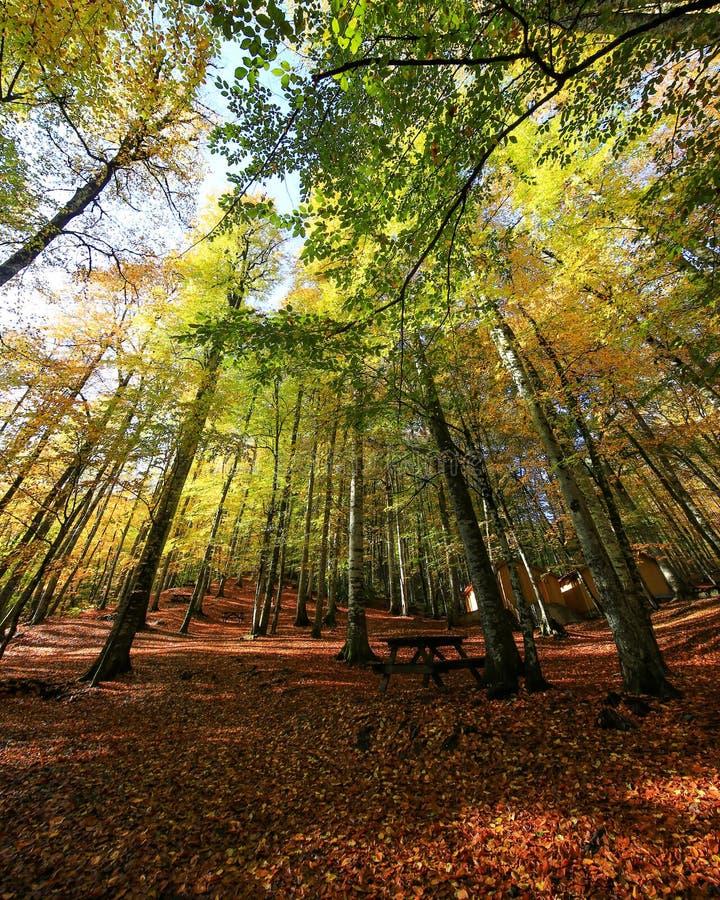 Bäume bis zum Himmel im yedigoller lizenzfreie stockfotos