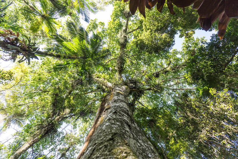 Bäume am botanischer Garten-Park Franz Damm, Timbo Santa Catarina lizenzfreie stockbilder
