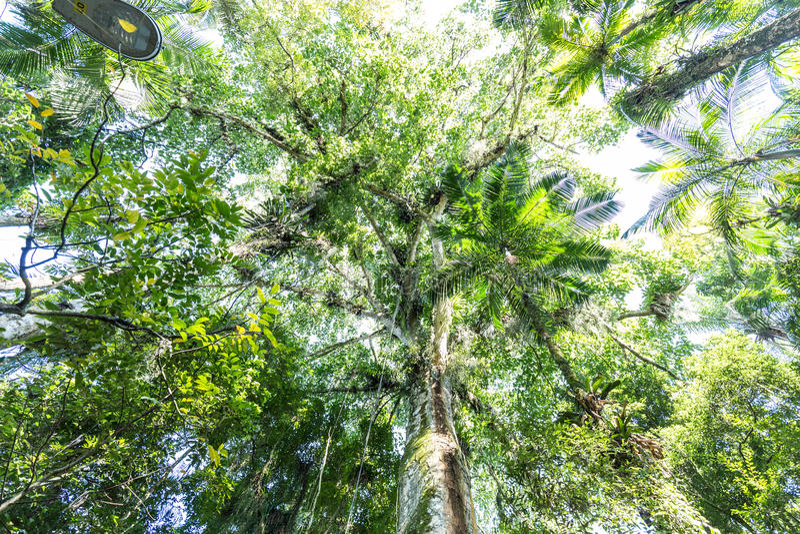 Bäume am botanischer Garten-Park Franz Damm, Timbo Santa Catarina lizenzfreie stockfotografie