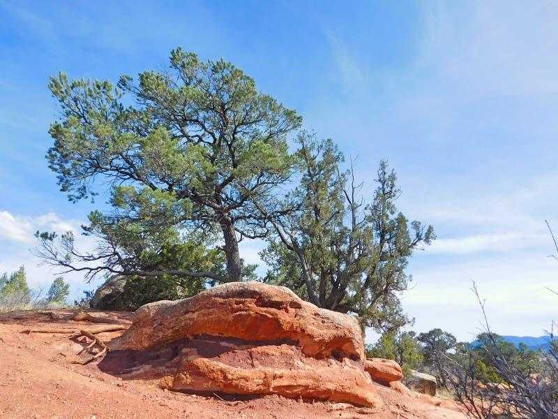 Bäume in Colorado-Landschaft am Garten der Götter stockfotografie